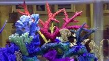 Jacksonville, Florida. Aquatic Care,  Fish Tanks 904-588-2700 Jacksonville, FL. Fish tanks,