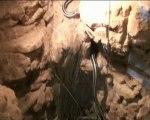 Lichanura trivirga trivirgata ( ex Charina trivirgata - Boa à trois bandes - Rosy boa)