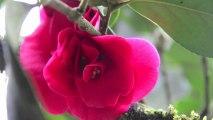 """Ouverture Printemps 2013  """" Tout en Bambou """" Parc Oriental de  MAULEVRIER     Mars 2013 - MAULEVRIER  Extraits de """"Tout en Bambou""""  Visite du Parc - Exposition-Atelier  Nature Expression et Création avec  Anne BAUTRAIT"""
