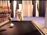 Un chat marche sur un tapis roulant