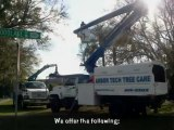 Arbor Tech Tree Care: Affordable Tree Pruning and Removal by Certified Arborists in Lakeland FL