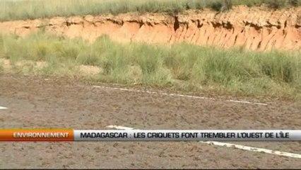 Madagascar : Les criquets font trembler l'ouest de l'île