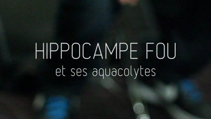 Hippocampe Fou, Céo et Deska - Aqua Rencontre et Aqua Freestyle !