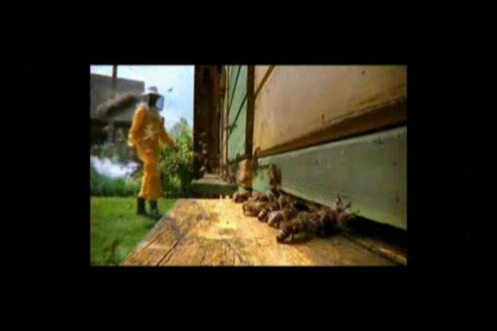 Beekeeping101:  A Beginner Beekeepers Guide