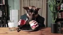 Odin, l'incroyable chien qui mange comme un homme