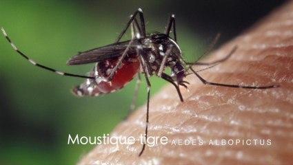 Frédéric Ferrer vous dit tout sur le moustique tigre, les déterritorialisations du vecteur