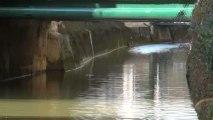 Hirondelle rustique (Soulaines-Dhuys-10, le 13 avril 2013)