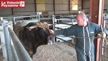 Aveyron : des Charolaises et Aubrac en Lituanie