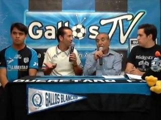 Gallos TV 310