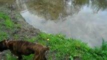 Elliot se désaltère dans la mare aux canards.