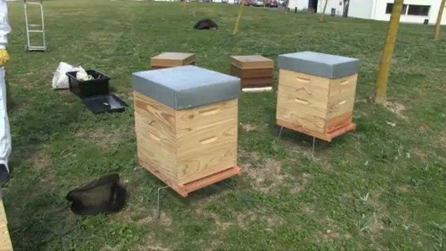 Norauto installe 4 ruches sur son siège social