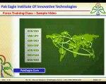 Forex Urdu Training Classes In Pakistan - Forex Urdu Training Video - Understanding Forex Quotes