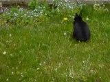 Vadrouille le lapin au jardin