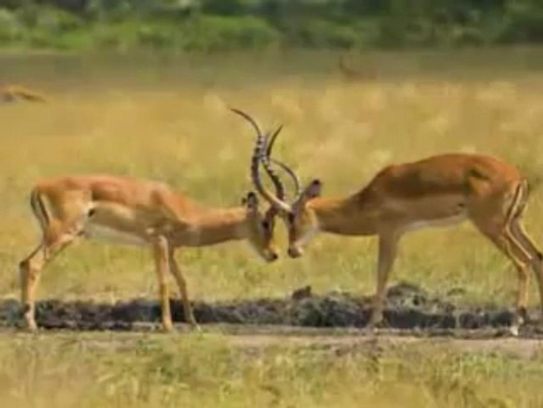 Africa Holidays - African Safari Vacation