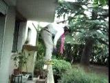 Buisson Jumping Pilou