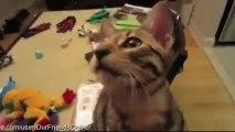 Weird Cat Doing Weird Things