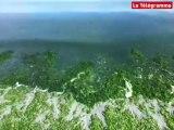 Pays de Brest. Algues vertes, la menace fantôme