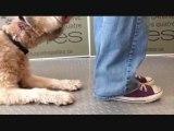 Dressage: comment entraîner un chien à se croiser les pattes en renforcement positif méthode clicker.