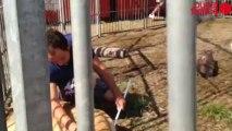 Michaël Douchet, un des plus jeunes dompteurs de France - Les fauves du cirque Sébastien Zavatta