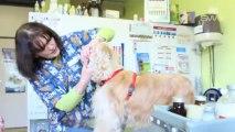 Vétérinaire et soins animaux près de Mons By Sw tv