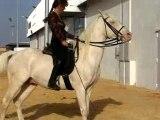 Salon du cheval 2006