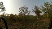 Les singes dans la réserve Corbett