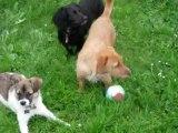 méllie apprend à jouer au ballon