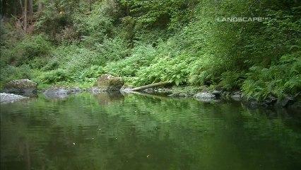 Gary Stroutsos River Of Life