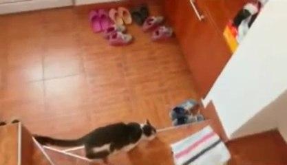 Cinq portes n'arrêtent pas un chat détérminé