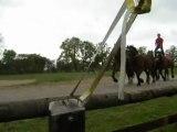 Spectacle de chevaux de trait..