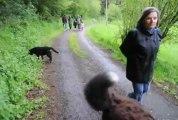 école du chiot par Frédéric ARNAULT, éducateur comportementaliste canin à Clermont et St Dier depuis 2003