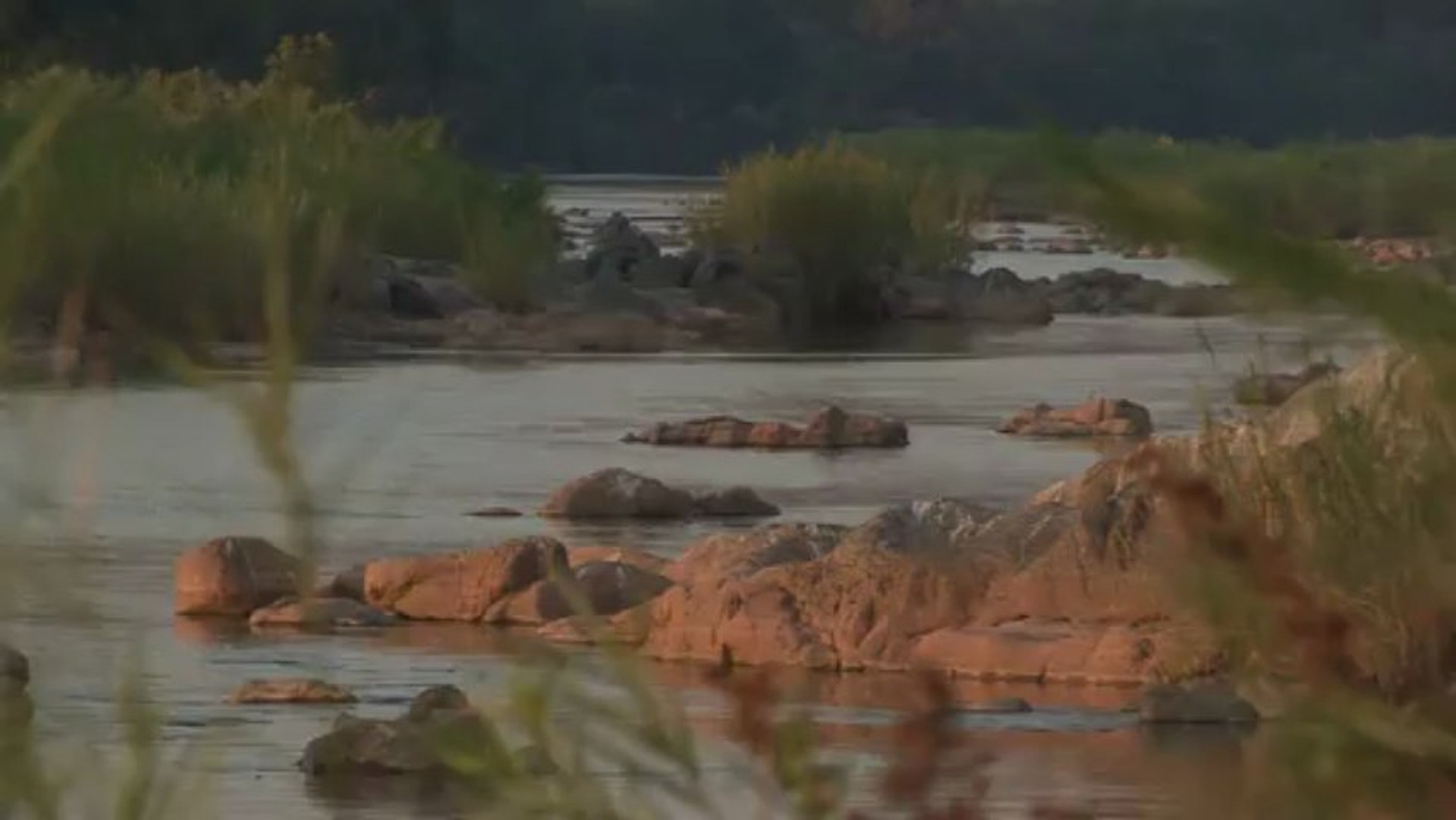 Sound of the African Bushveld, Hippo - AFRICAN WILDLIFE