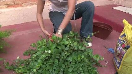 Aprenda a montar um jardim vertical bem baratinho