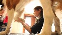 Toilettage canin / Toilettage à Dour, Mons pour chien By Sw tv