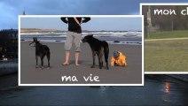 Ma vie, mon chien, ma ville ! Faut-il des parcs canins à Paris ?