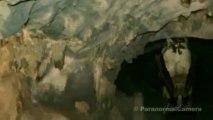 STRANGE CREATURES Real HUMAN SIZED vampire bat caught on tap