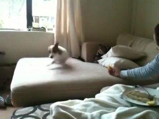 Histoire du petit chien qui goûte du citron.