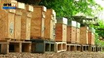 Les abeilles de plus en plus menacées - 28/05