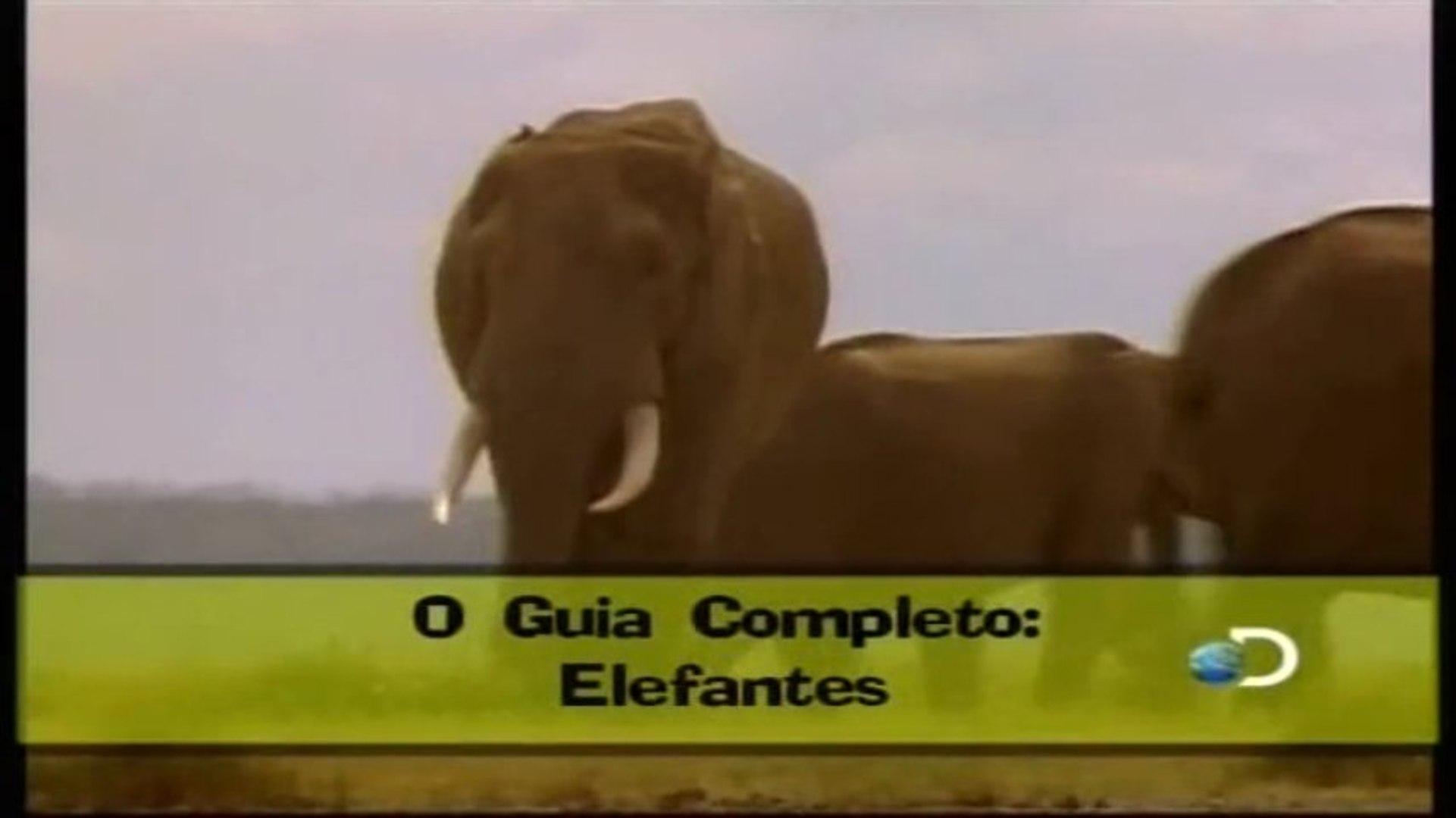 Discovery na Escola - Guia Completo: Elefantes e Grandes Primatas [Discovery Channel]
