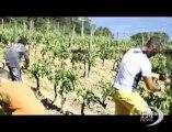 Frescobaldi per Gorgona, vino per dare lavoro ai carcerati. 2700 bottiglie di bianco saranno prodotte dai detenuti
