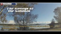 The Sayings of The Sahabas