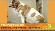 Pet Fit Club returns with the UK's fattest pets