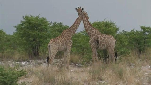 Etosha Park, Cape to Namibia Route , Mobile Version
