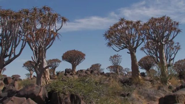 Kokerboom Woud en Aus, Cape to Namibia Route , Mobile Version