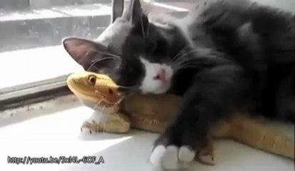 Sentimenti animali: si prendono cura tra di loro
