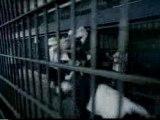Blink 182-Feeling This