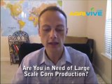 Buy Bulk Corn, Maize, Sweet Corn Harvester, Sweet Corn Harvesters for sale, Golden Harvest seed Corn