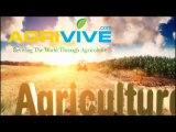 Bulk Corn Dealer, Maize, Farm Corn, Sweet Corn Farming, Corn Production in the United States