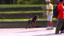 Dog Steals Skateboard and Rides Off!!!