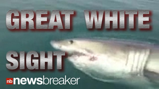 """""""JAWS"""" CAUGHT ON TAPE: Great White Shark Spotted Off New Jersey Coast"""